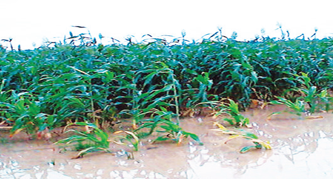 Youth Group: We can Eliminate Poverty, Revolutionize Agric in Nigeria